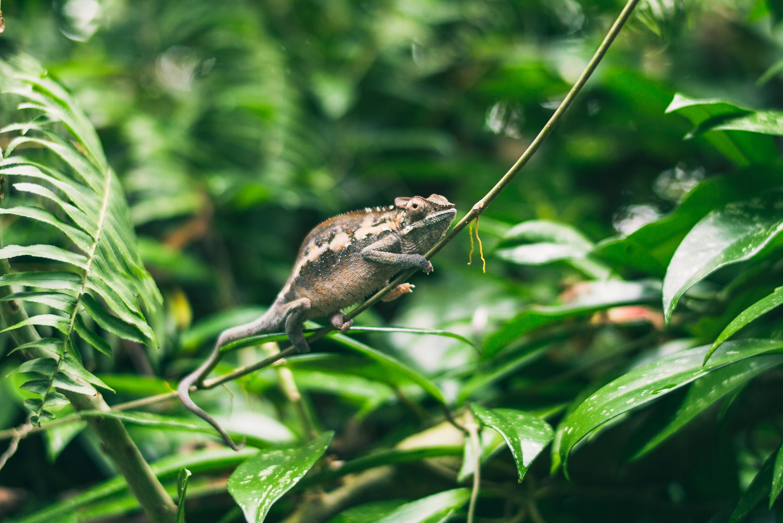 chameleon on plant branch during daytime