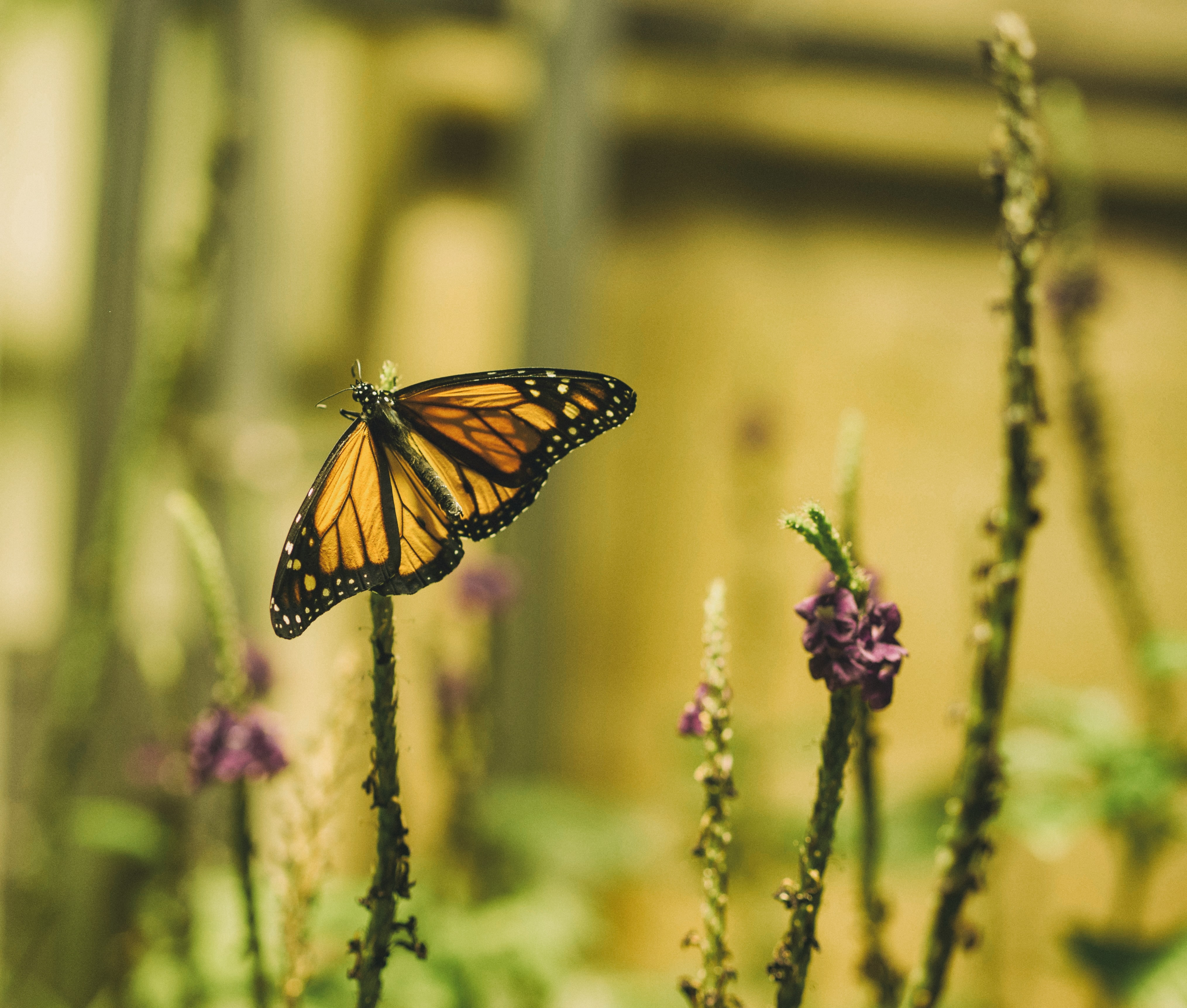 brown and black butterfly on plant