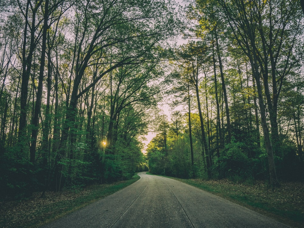 road surrounded with trees