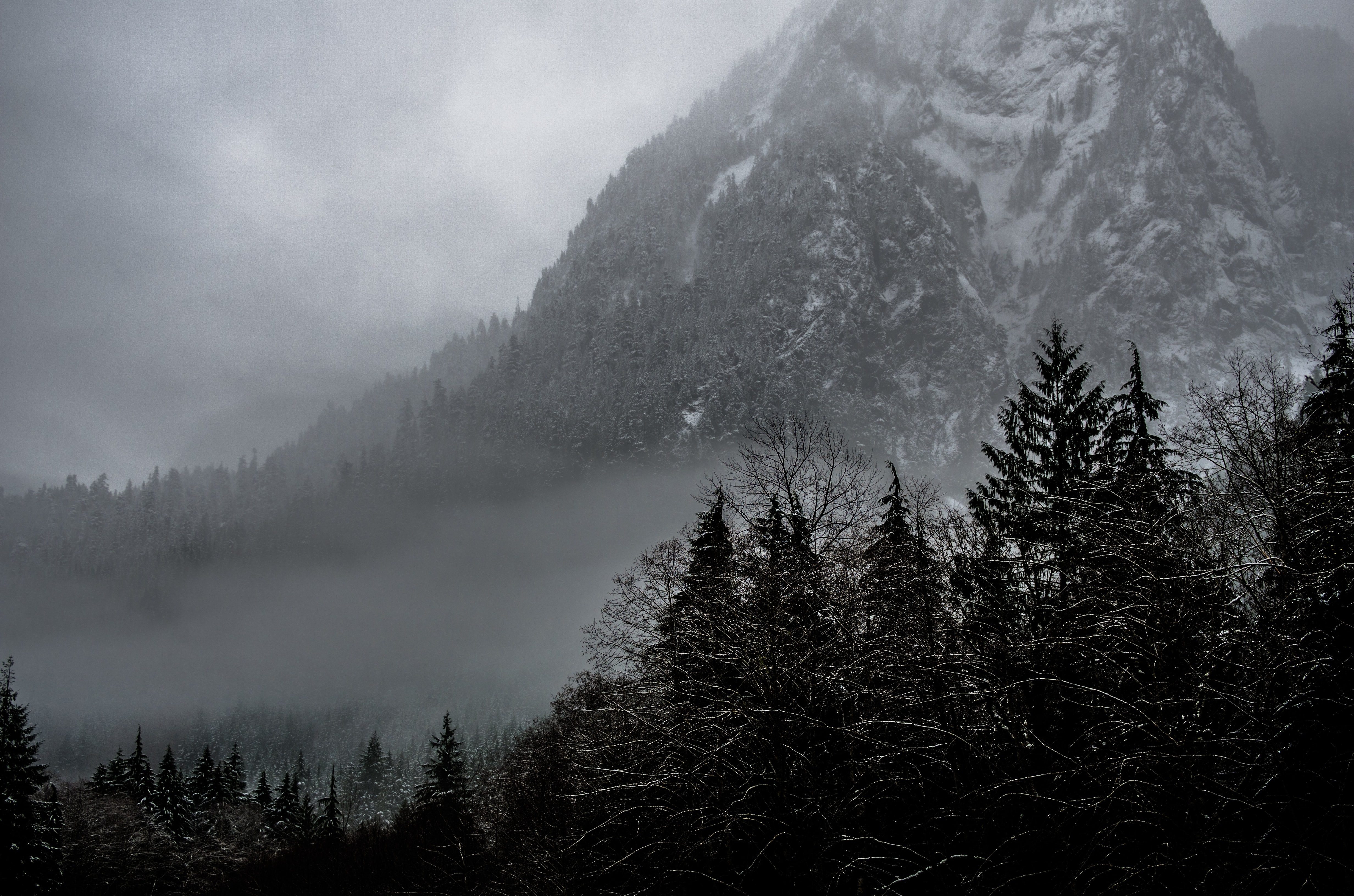 A cloudy scene with trees and a mountain covered with trees and snow in the background