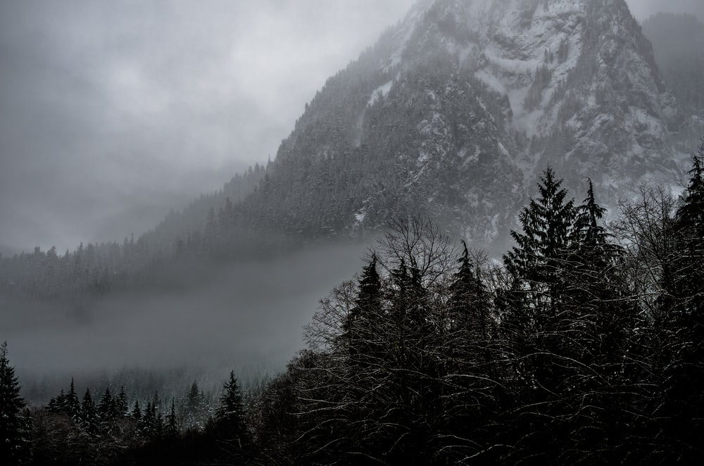 Misty Mountain Forest Pictures Download Free Images On