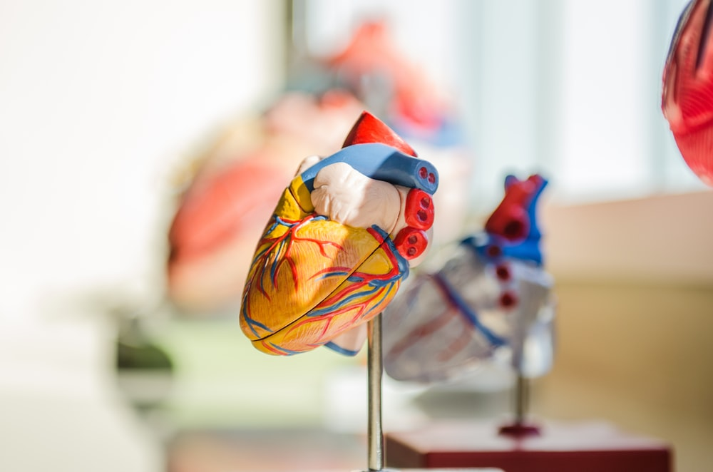 selective focus photography of heart organ illustration