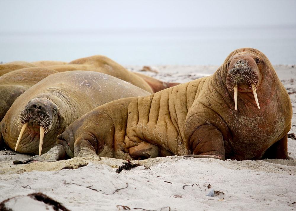 sea lion on seashore during daytime