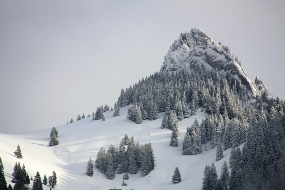 pine trees on mountain with white snow during daytime