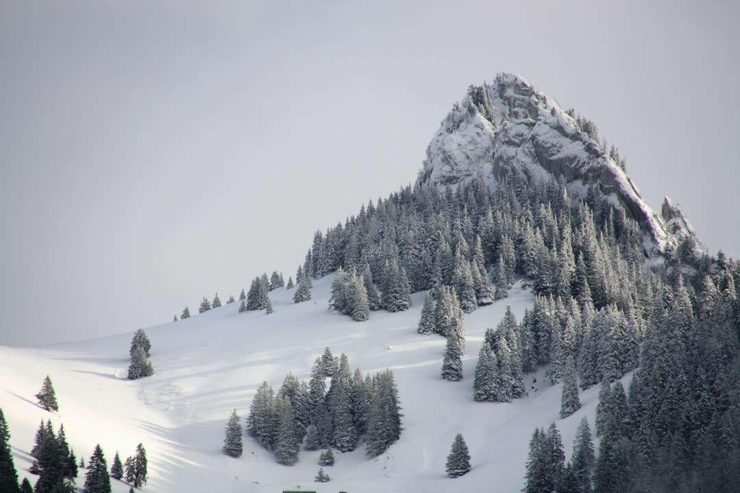 Tree covered mountain in snow