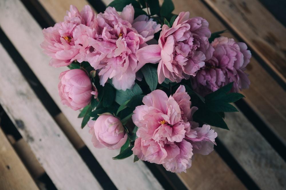 pink carnation flower arrangement on bench