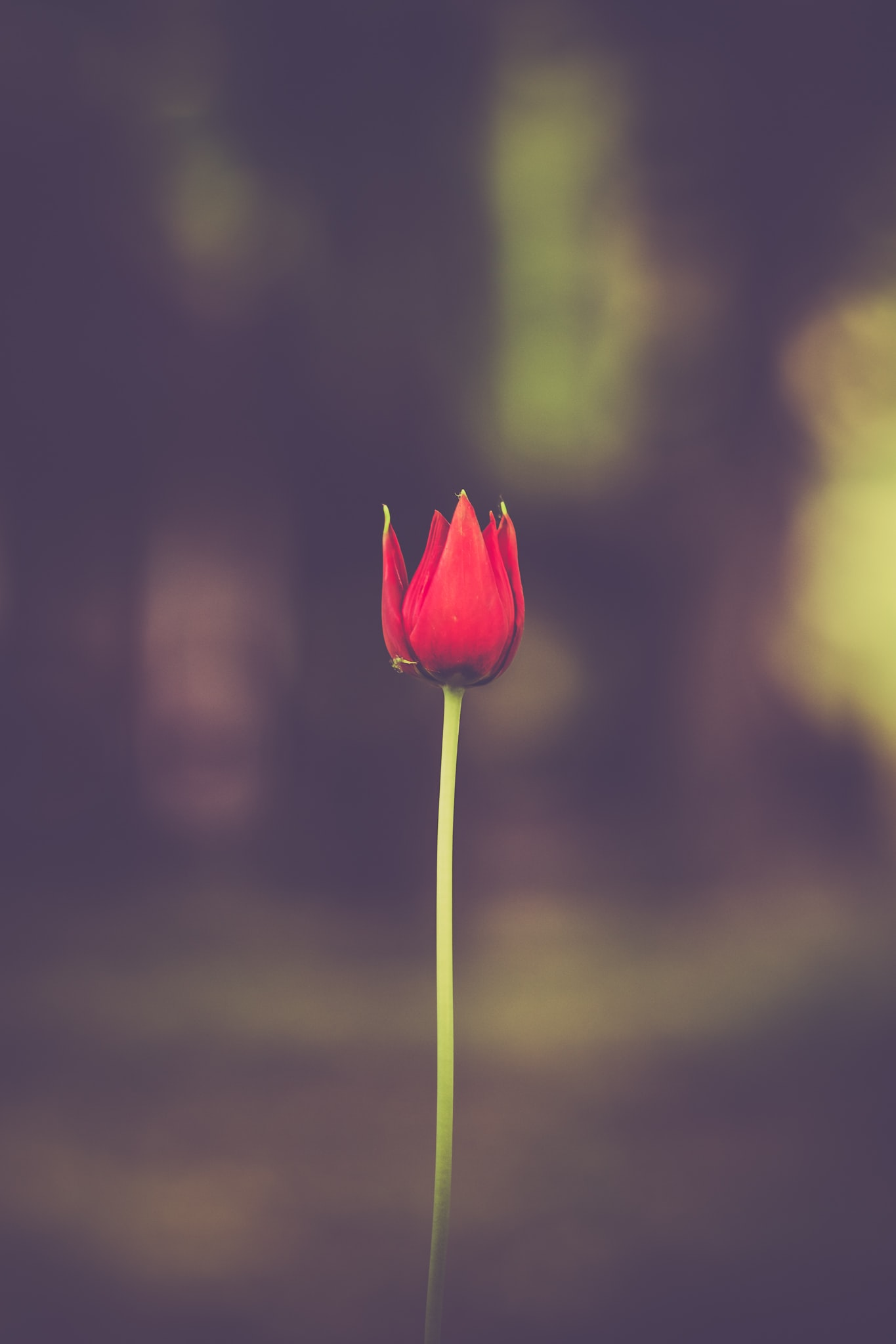 selective focus of red petaled flower