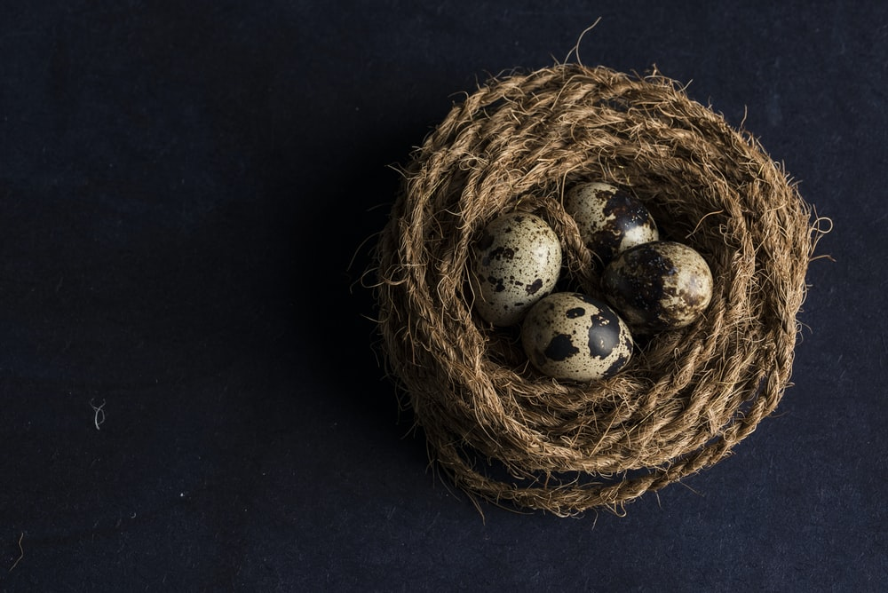 four brown and black egg close-up photography