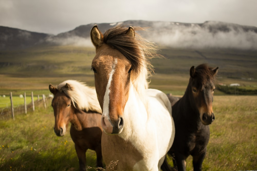 three assorted-color horses running away from a mountain
