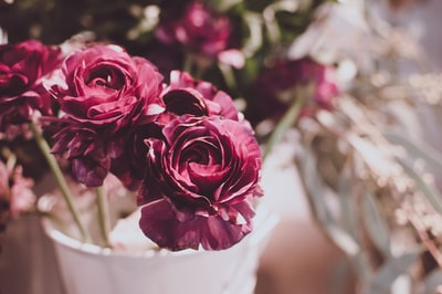 selective focus photography of red carnation flowers bouquet teams background