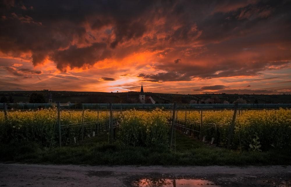 green grass field during sunset