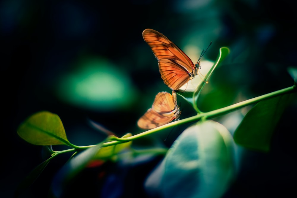 brown and black butterfly perching on brown leaf selective focus photography
