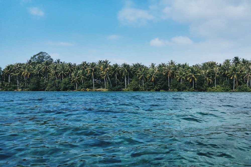palm tree island near body of water