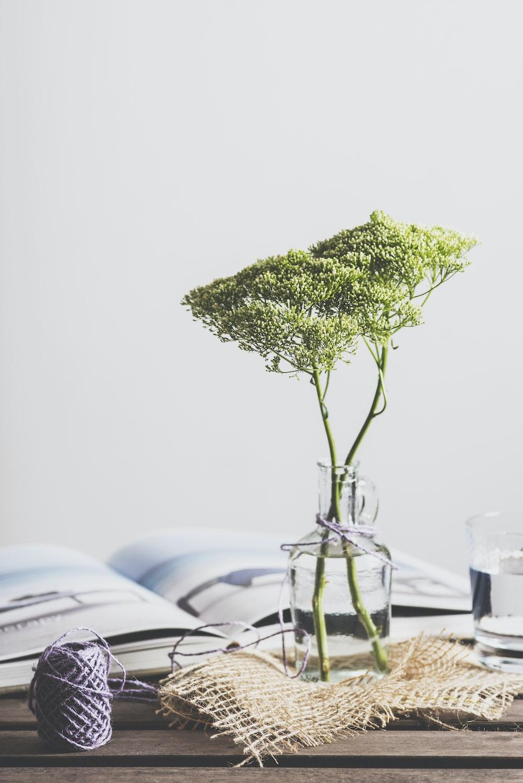 green leafed plant on glass vase