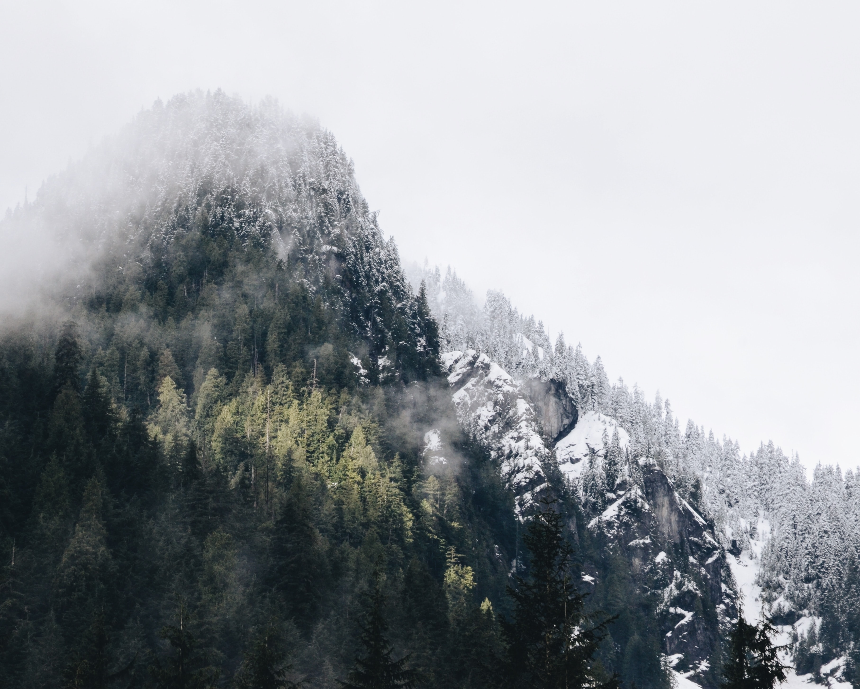 A mountain with its slopes covered in evergreen trees near North Vancouver