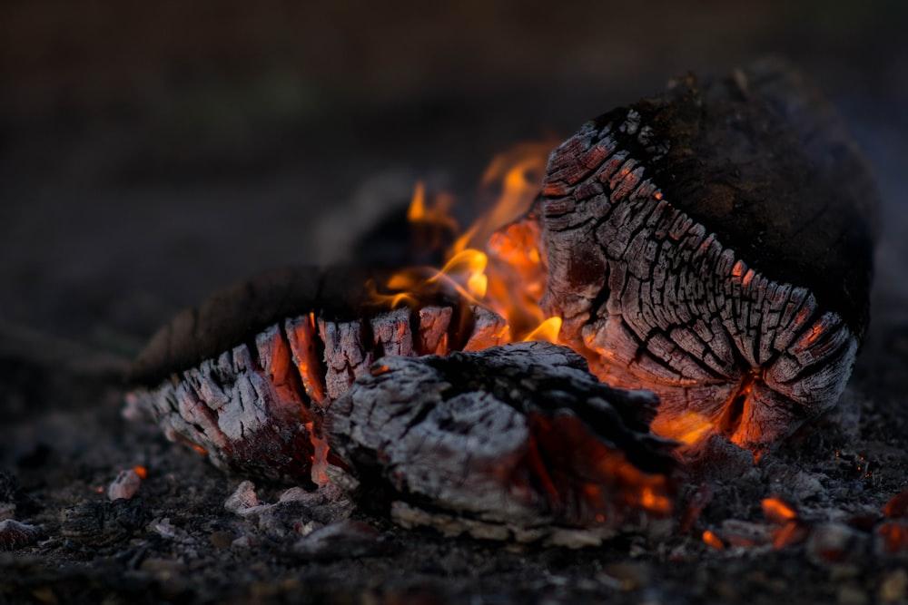 close photography of burning wood