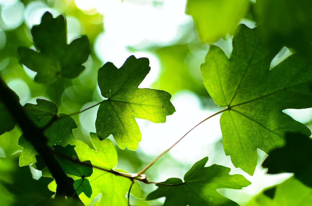 green leaves at daytime