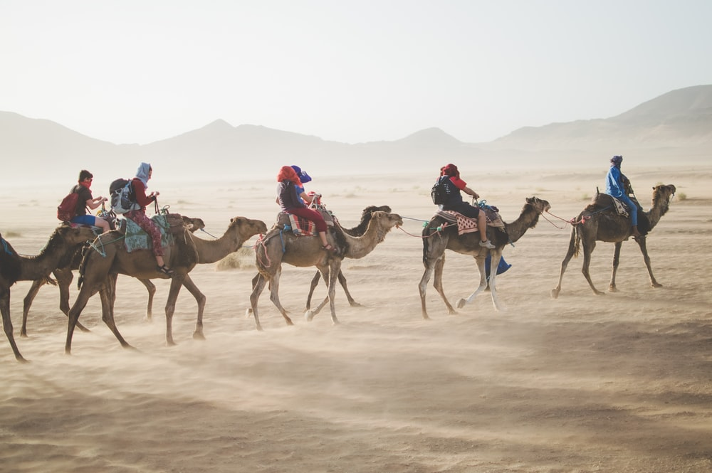 group of people riding camel on sand dune