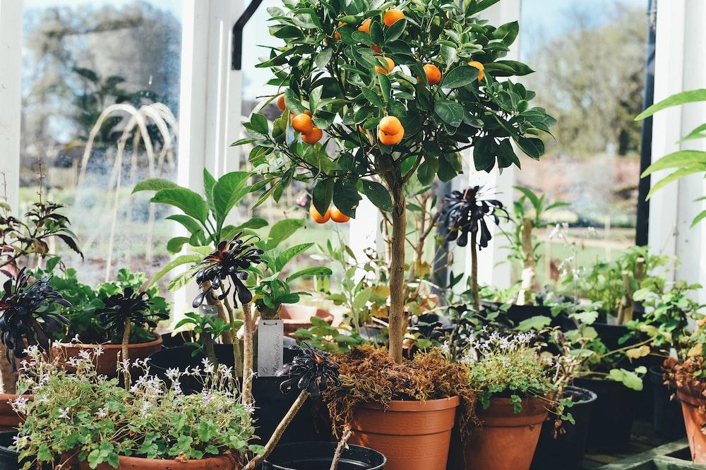 round orange fruits lot