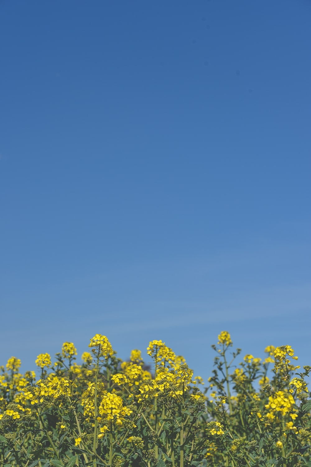 yellow petaled flowers under clear blue sky during daytime