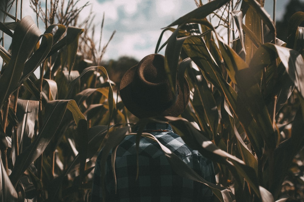 person wearing brown trilby hat on corn field