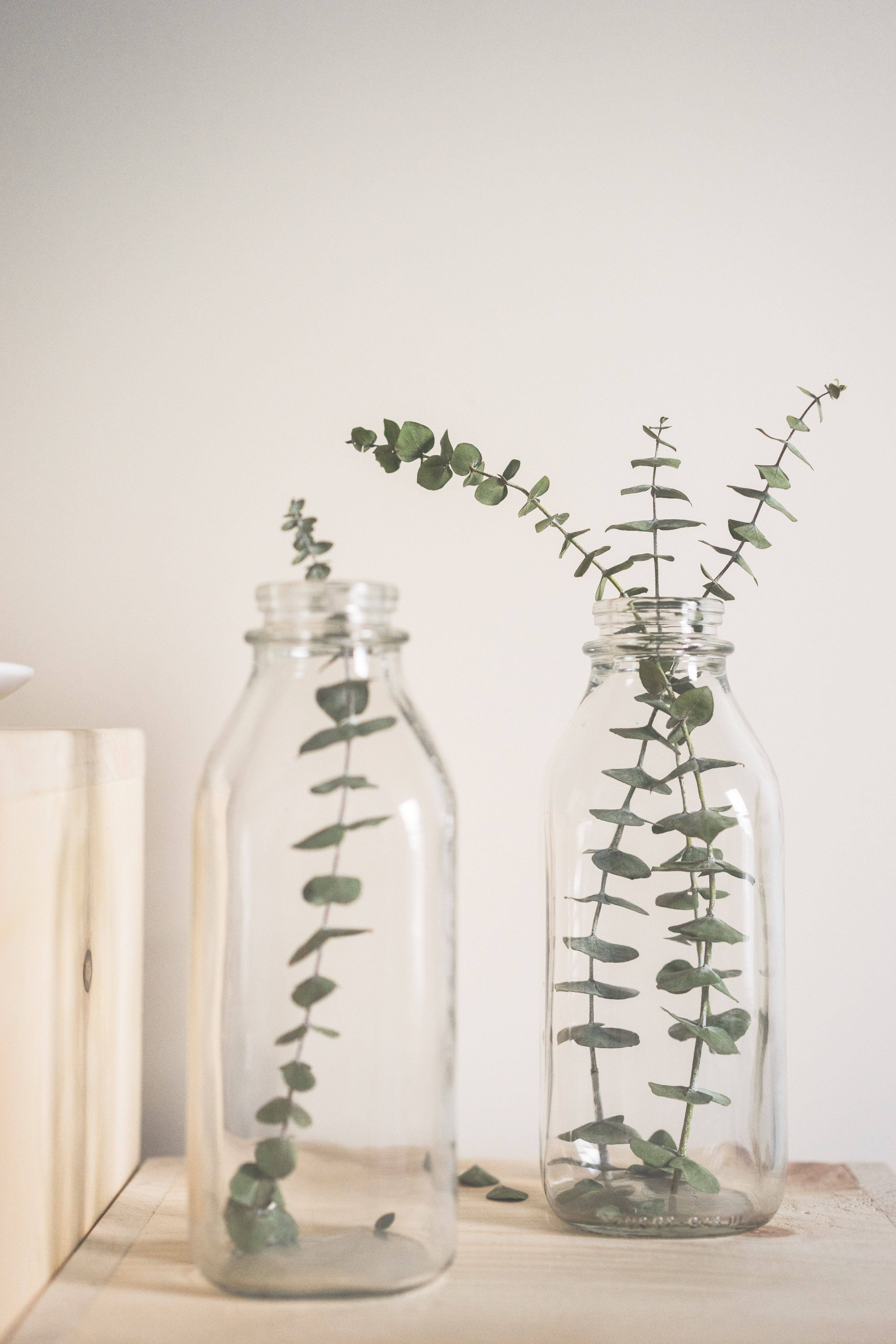 green leafed plant on clear glass vase