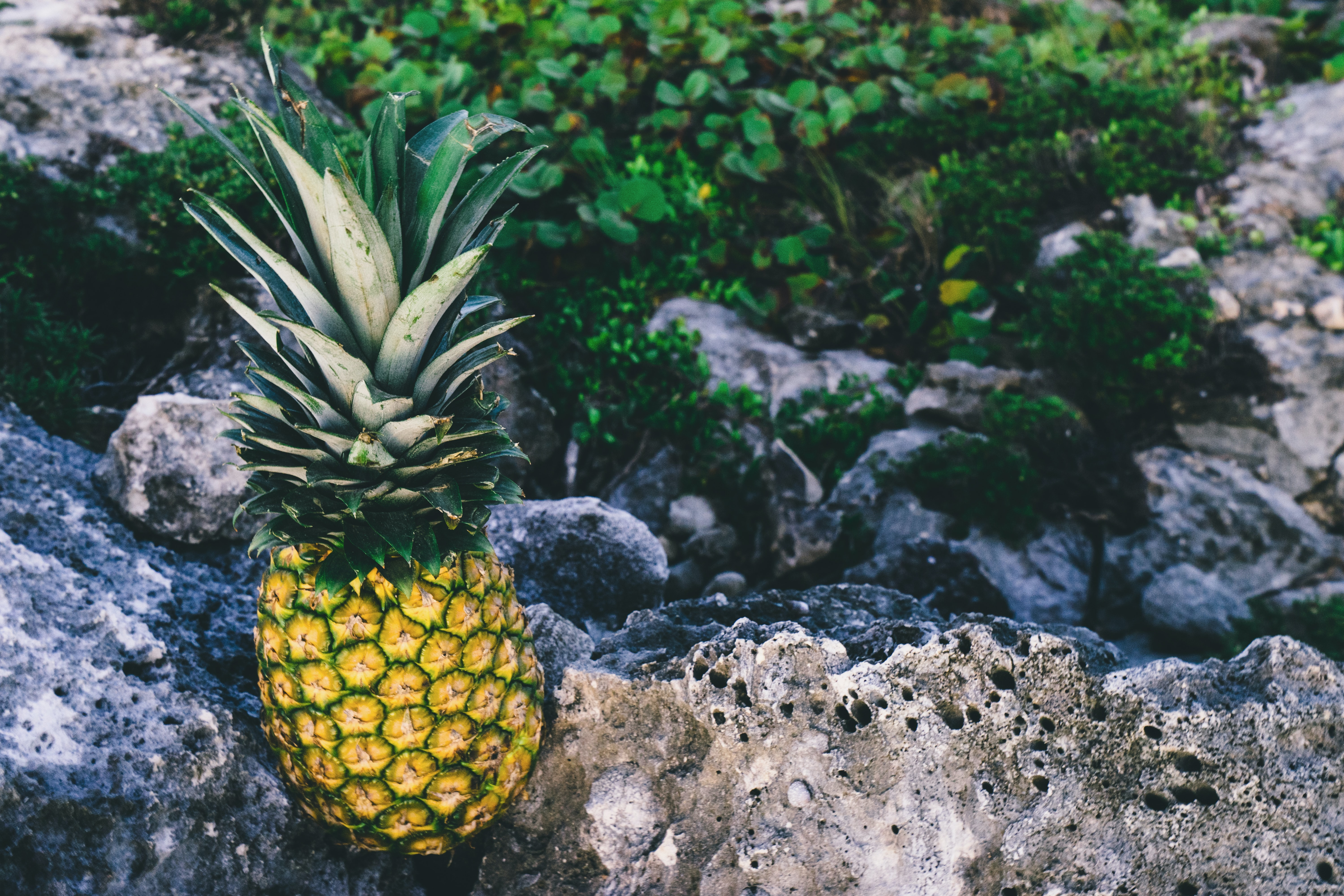 pineapple on rock during daytime