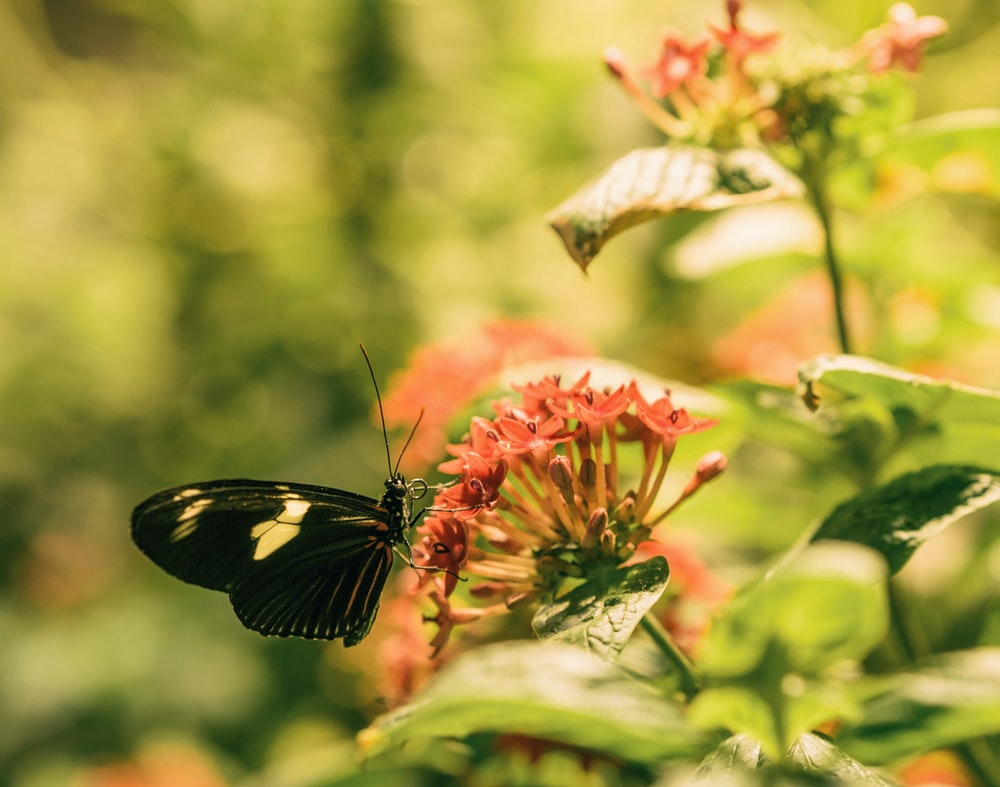 black and beige butterfly