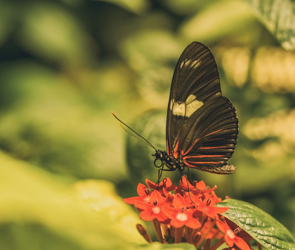 black butterfly on selective focus photography