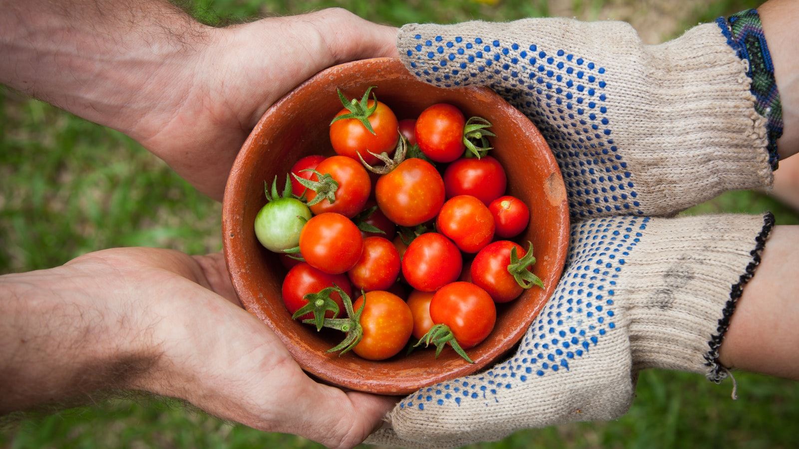 Sharing a bowl of tomatoes