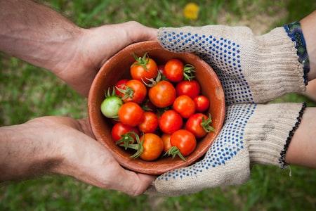 Growing Your First Backyard Vegetable Garden
