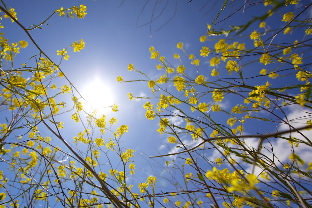 low angle photography of yellow petaled flowers