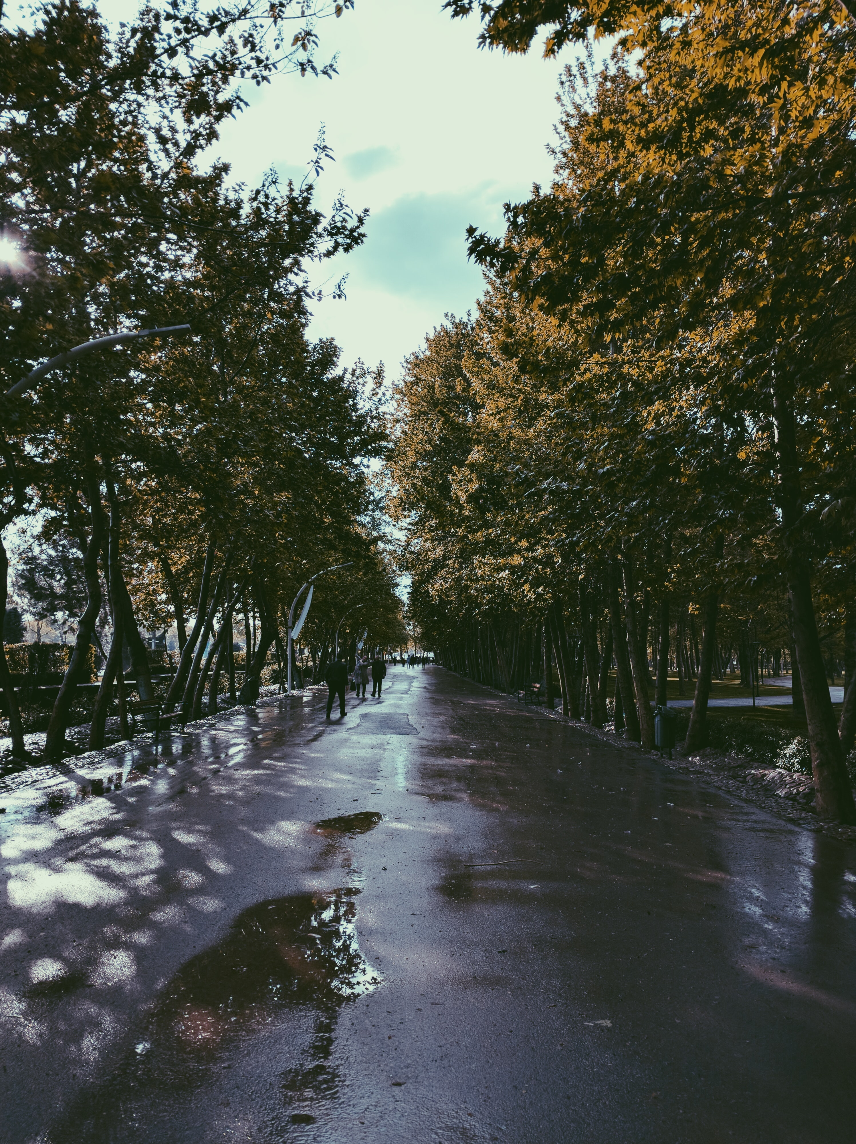 Free Unsplash photo from mohammad alizade