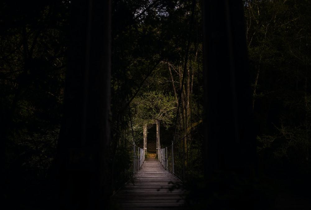 selective focus photography of bridge
