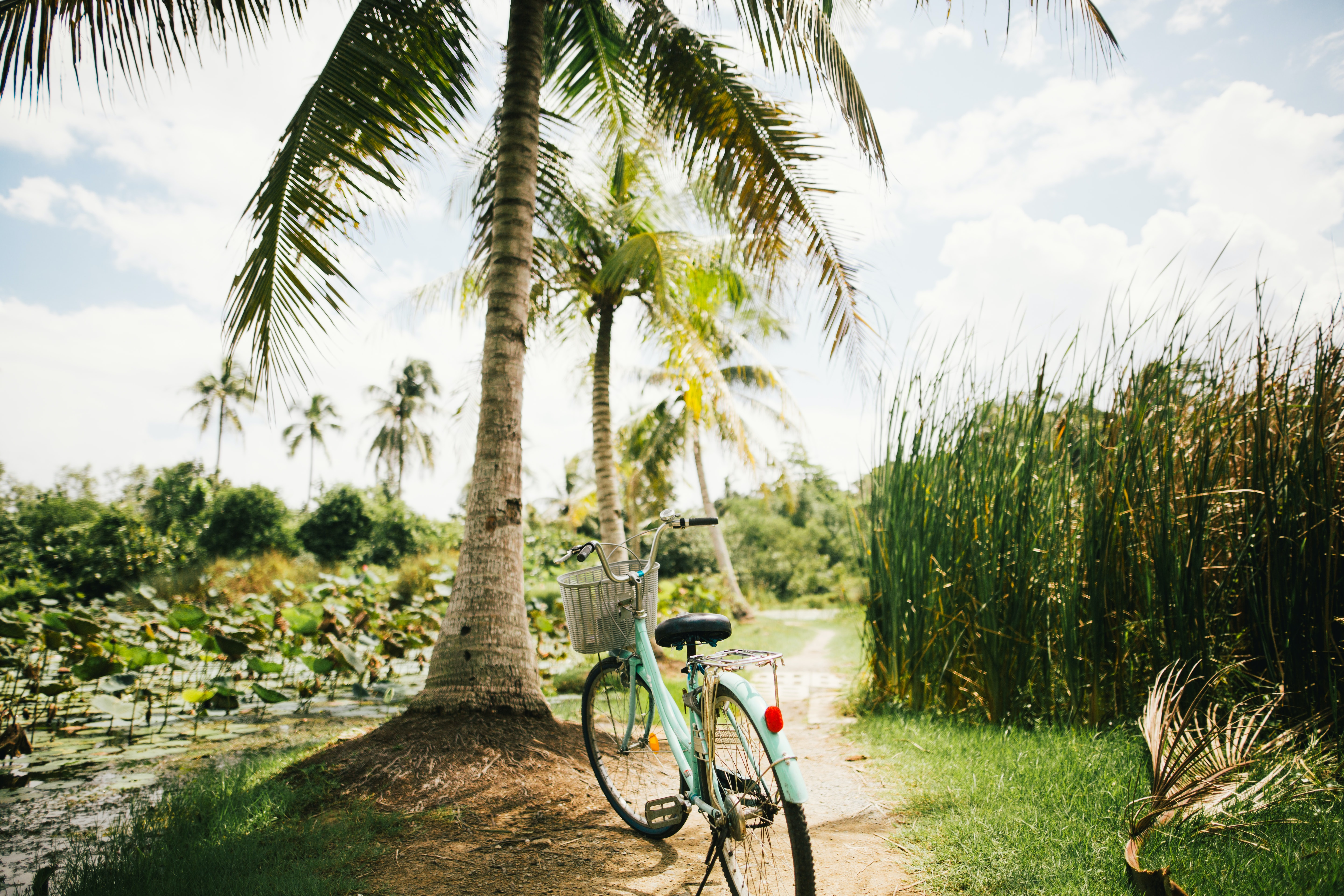blue beach cruiser bike near on the coconut tree