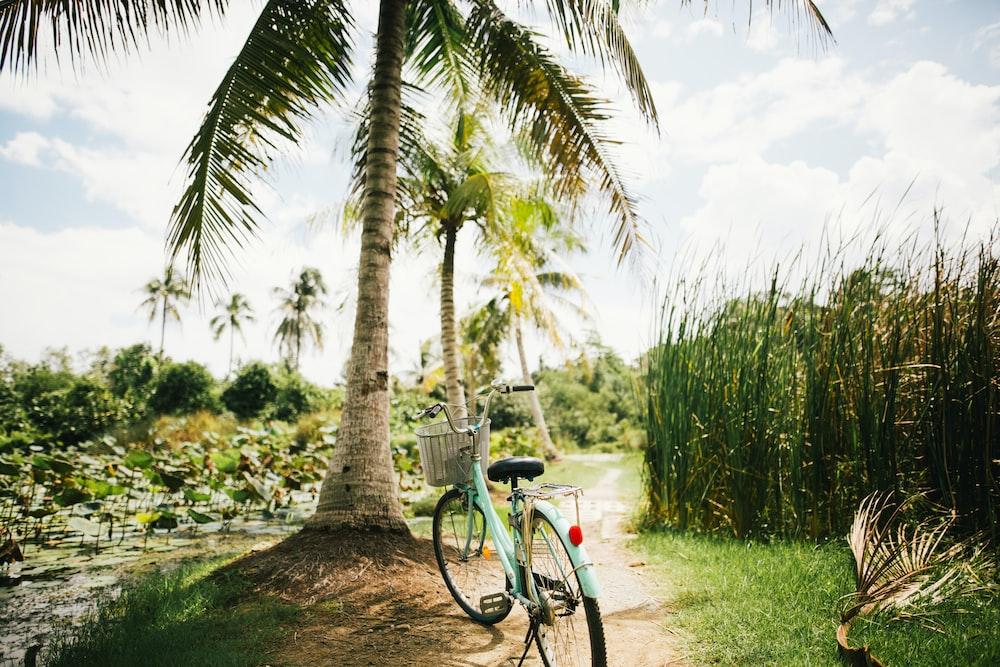 blue beach cruiser bike near on the coconut tree