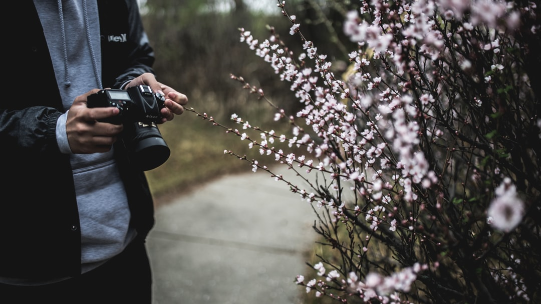 Photographing flowers on a walk