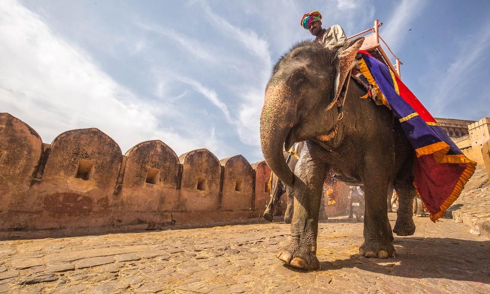 man riding on walking elephant at daytime