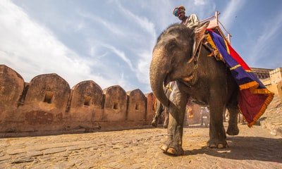 man riding on walking elephant at daytime india teams background