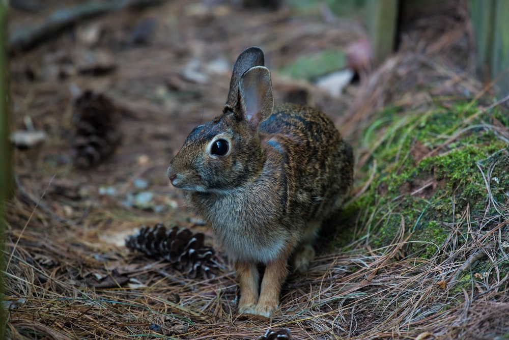 closeup photography of brown rabbit on ground