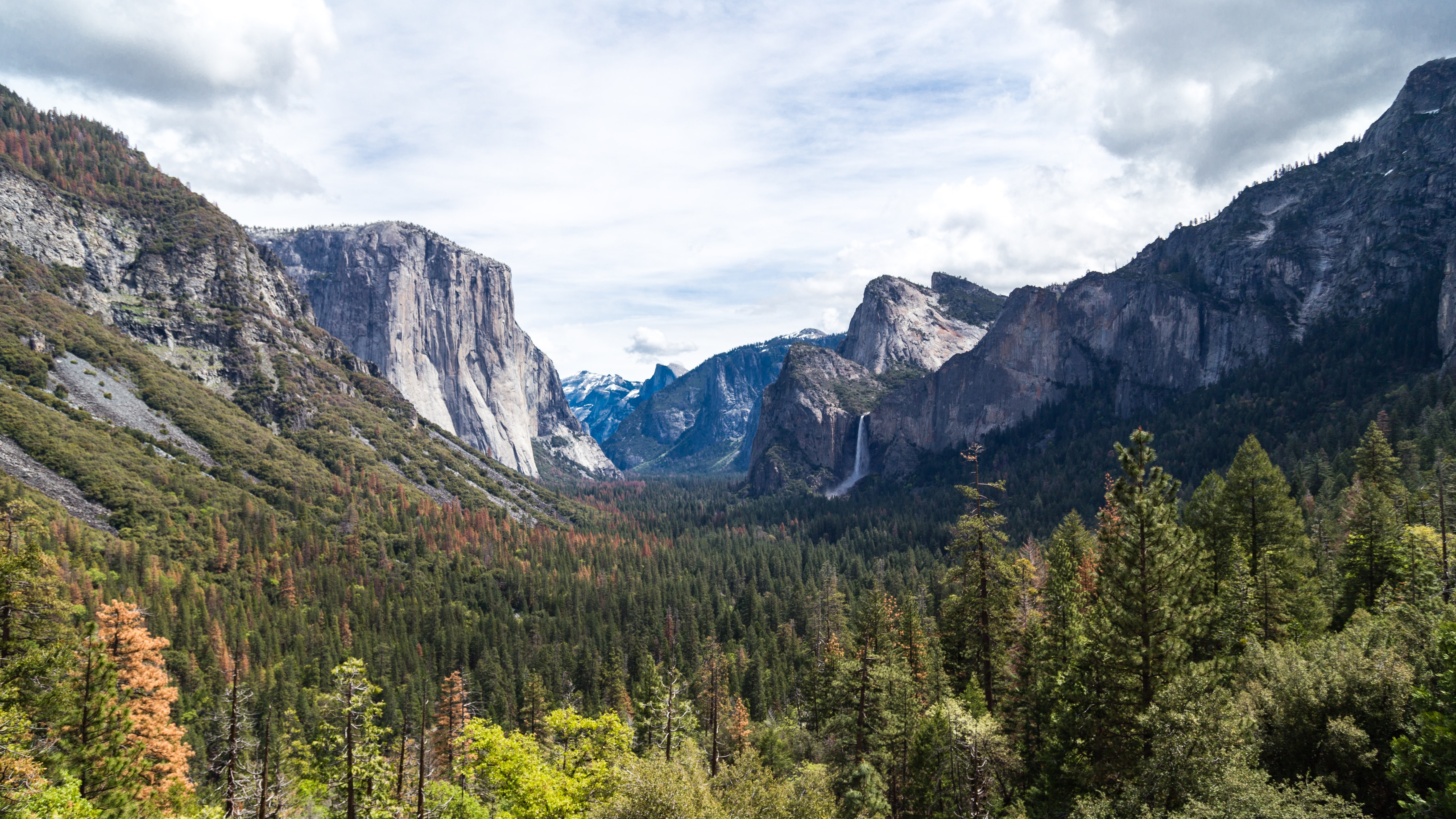 The mountains and forest in Yosemite National Park