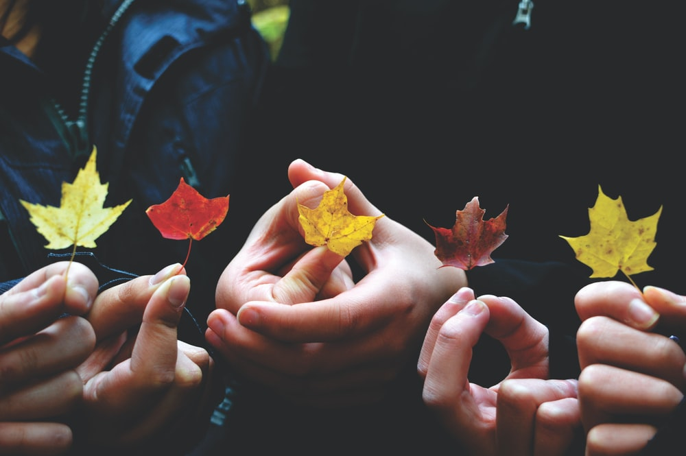person's holding leaves during daytime