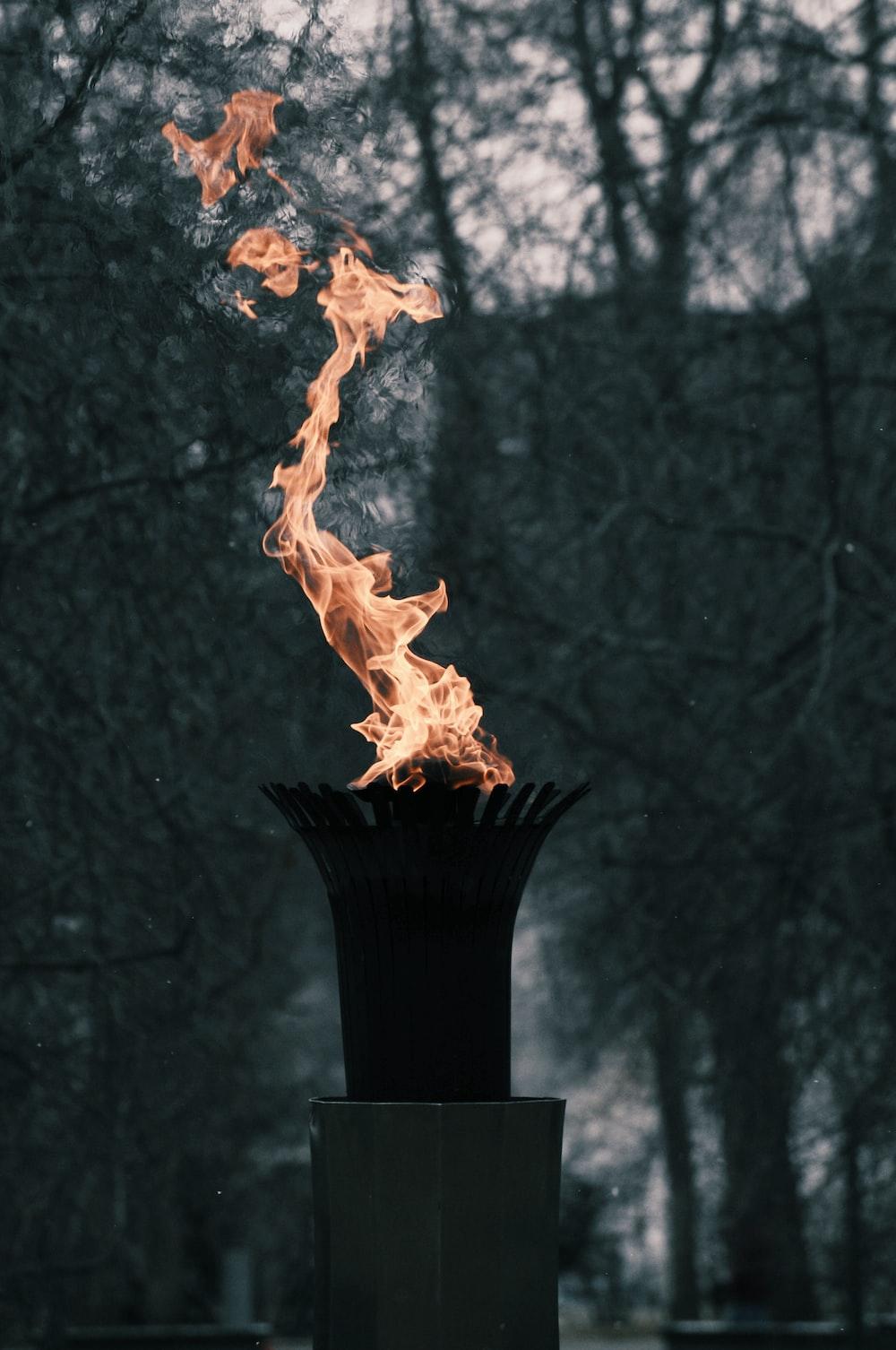 flame near trees