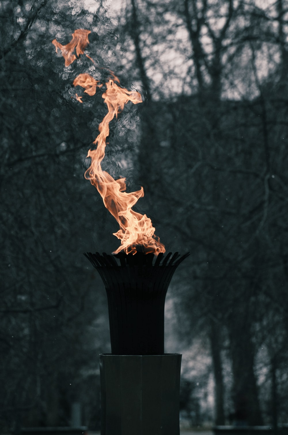 flame near trees