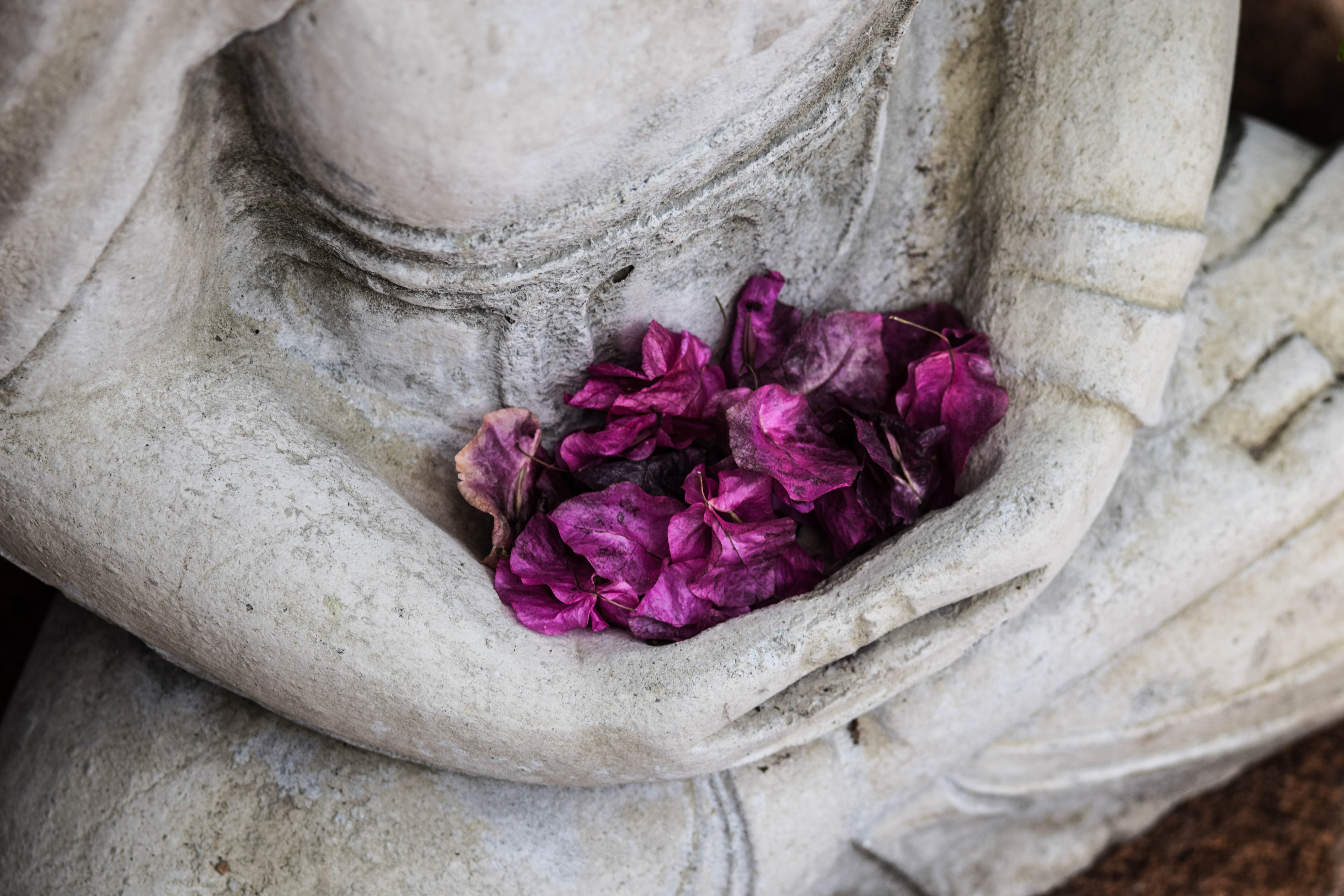 A bunch of purple flowers in the hands of a statue of a person sitting cross-legged