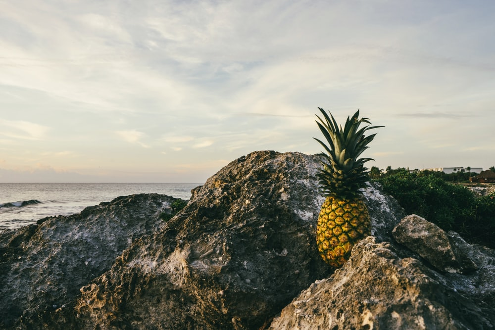 brown pineapple fruit on rock during daytime