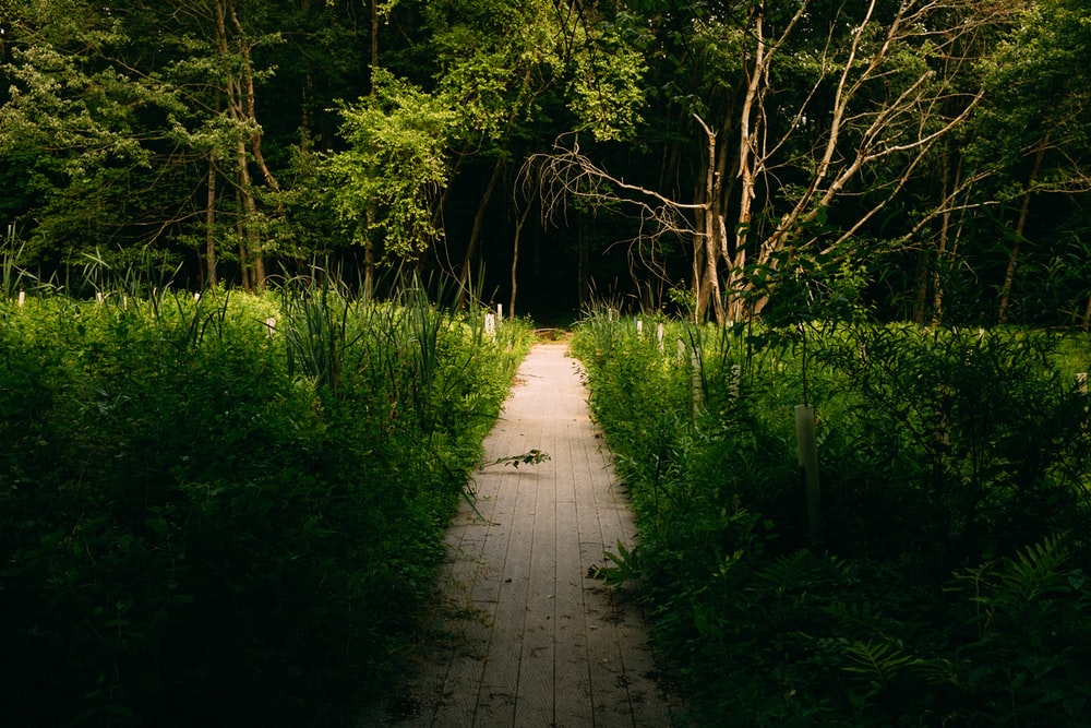 green trees on brown dirt pathway