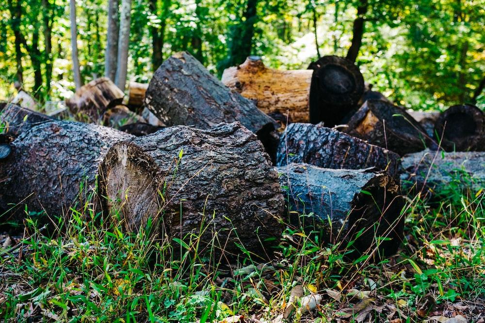 brown wood log on green grass field