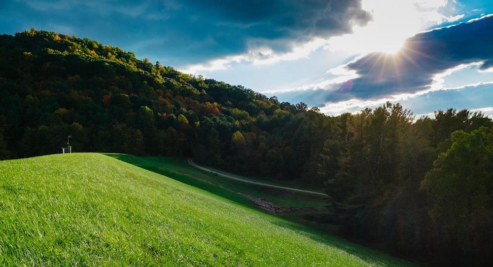 field of green grass near trees