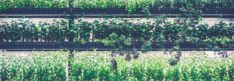 ChivesA Tasty Addition to Your Herb Garden
